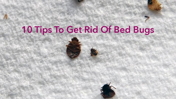 10 Tips To Get Rid Of Bed Bugs